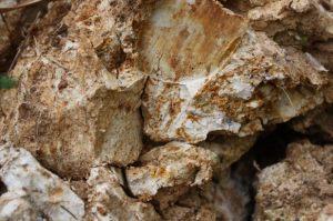 Batu Putih