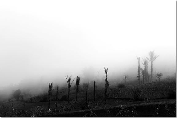 Kabut-Tebal-Sering-Menyelim