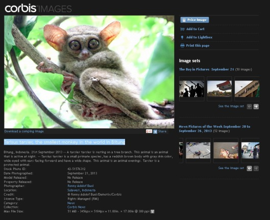 Corbis - Tarsius - Top of The week