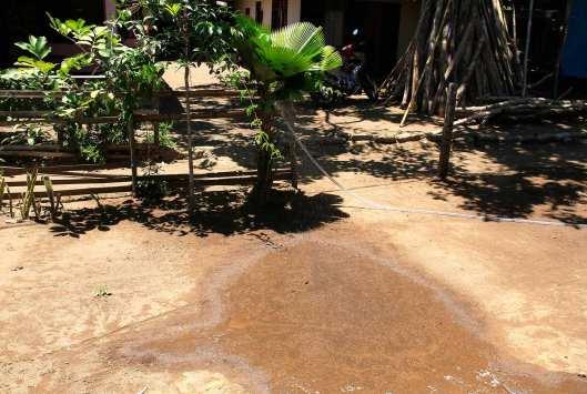 Semprotan air dari alat semprot yang saya letakkan di atas pohon palem membuat kolom air kecil di halaman depan rumah.