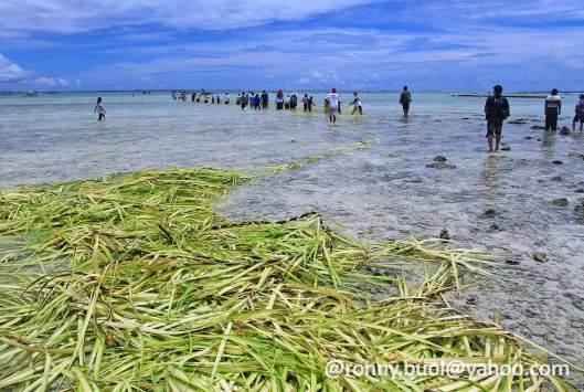 JANUR MANEE - Rangkaian janur kelapa yang dibuat jadi jaring sedang dipersiapkan pada Manee.